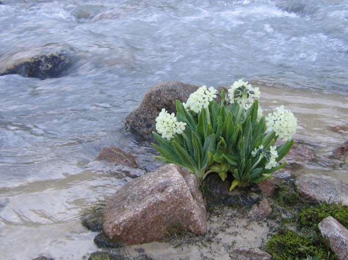 горные цветы крыма фото и названия