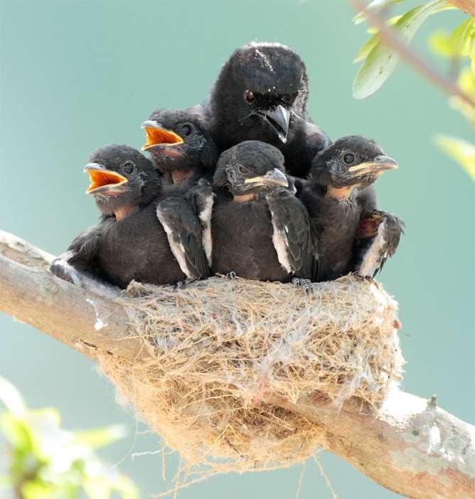 Птенцы