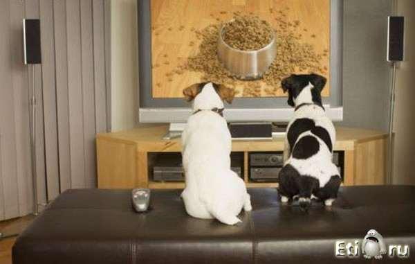 нравится ли собакам смотреть телевизор доллара Официальный курс
