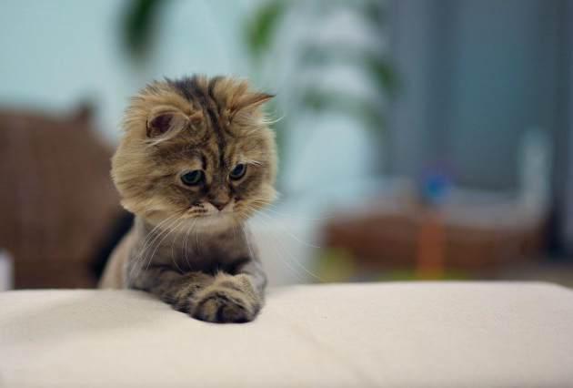 Мега подборка котячего позитива